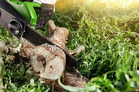 pic of cutting trees  - man  - JPG
