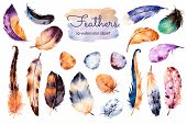 Постер, плакат: Watercolor hand painted set with 19 elements feathers