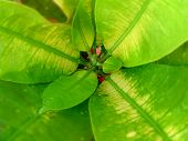 stock photo of crotons  - close up of green and yellow leaves, indoor or outdoor plant, young or growing croton - JPG