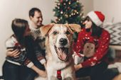 Happy Family In Stylish Sweaters And Cute Funny Dog Celebrating At Christmas Tree With Lights. Emoti poster