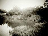 foto of bayou  - A picture I took of the bayou in my backyard - JPG