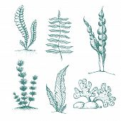 Ink Hand Drawn Seaweed Collection. Various Underwater Sea Plants And Algae. Vintage Collection Of Ve poster