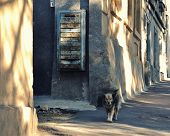 An Old Dog Walks Along An Old Street, An Old Mailbox Hangs On An Old House. Shadows From Trees On A  poster