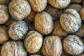 Natural Walnut Background Pattern Texture Abstract Walnuts Heap Pattern Background Blurred Edges Fra poster