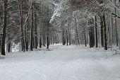 stock photo of paysage  - winter paysage - JPG