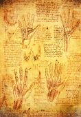 image of leonardo da vinci  - old leonardo da vinci antomy hands illusration - JPG