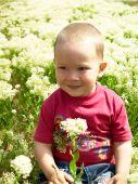 image of sand lilies  - Little nice boy picking flowers  - JPG