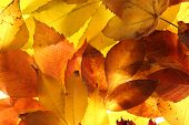 bright autumn leaves, close up