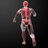 picture of radiation therapy  - Running skeleton by X - JPG
