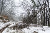Snowy Path With Broken Trees