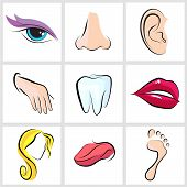stock photo of human ear  - set icons with flat parts of the human body ear nose eyes tongue teeth mouth lips head arm leg  foot - JPG