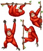 stock photo of orangutan  - Illustration of orangutan hanging on vines - JPG
