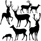 foto of deer family  - deer black and white silhouette set  - JPG