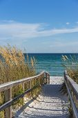 picture of sea oats  - Sandy boardwalk path to a snow white beach on the Gulf of Mexico with ripe sea oats in the dunes - JPG