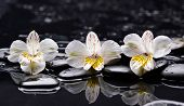 pic of three life  - Still life with three white orchid with therapy stones  - JPG