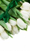 pic of bosoms  - white  tulips with green bow close up  isolated on white background - JPG