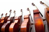 image of double-bass  - row of double basses leaning against a wall - JPG
