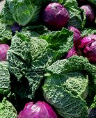 foto of cruciferous  - A collection of large beautiful purple and green cabbages cover a table - JPG