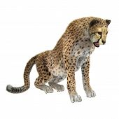image of cheetah  - 3D digital render of a big cat cheetah isolated on white background - JPG