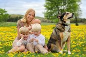 pic of baby dog  - A happy young mother and her three children anewborn baby girl a toddler boy and big brother are playing in a country flower meadow with their pet dog on a spring day - JPG