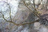 foto of off-shore  - Tree hanging off a cliff on moens klint in denmark - JPG