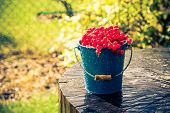 picture of bucket  - Red currant fruit in a bucket in the summer rain on wooden  - JPG