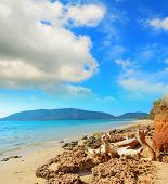 foto of driftwood  - driftwood by Mugoni beach shoreline in Sardinia - JPG