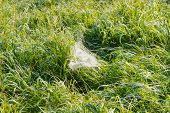 picture of cobweb  - morning dew on a grass and cobweb - JPG