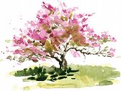 pic of cherry trees  - cherry blossom tree drawing by watercolor - JPG