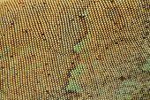 stock photo of lizard skin  - Scale of Skin Texture Pattern Green Iguana - JPG