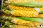 picture of maize  - Corn or maize is on sale at the Bazaar - JPG