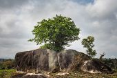Lonely Tree On Rocks. Concept Of Vitality And Strength poster