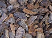 Large Detailed Bark Pieces Background Photograph. Naturally Textured And Coloured Bark Pieces Used I poster
