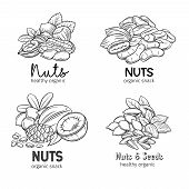 Banners With Hand Drawn Nuts And Seeds. Pistachio, Cashew, Coconut, Hazelnut And Macadamia. Cola Nut poster
