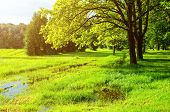Spring Landscape In Sunny Weather. Green Spring Trees And Flooded Spring Lawn In The Park In Sunligh poster