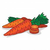 Isolate Ripe Carrot Root Vegetable On White Background. Close Up Clipart With Shadow In Flat Realist poster