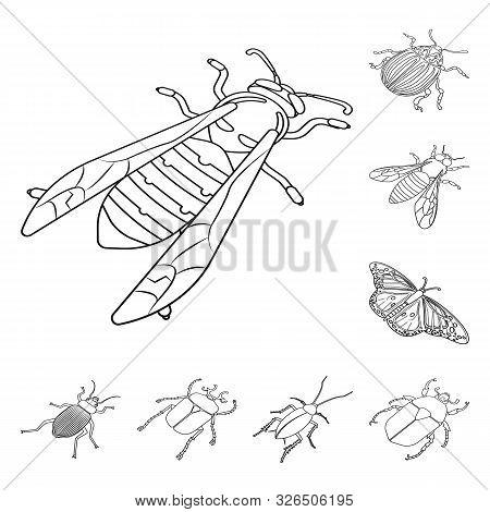 poster of Vector Illustration Of Fauna And Entomology Icon. Collection Of Fauna And Animal Vector Icon For Sto