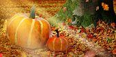 Two Pumpkins In Sunlight Among Fallen Leaves Near A Tree Trunk.two Pumpkins In The Sun Among Fallen  poster