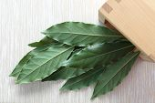 Bay Leaf Green. Laurel Or Sweet Bay In A Wooden Bowl On A Gray Table poster