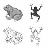Isolated Object Of Wildlife And Bog Logo. Set Of Wildlife And Reptile Stock Vector Illustration. poster