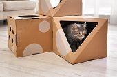 Cute Gray Tabby Cat Inside Cardboard House In Room. Lovely Pet poster