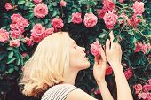 Perfume And Cosmetics. Woman In Front Of Blooming Roses Bush. Blossom Of Wild Roses. Secret Garden C poster