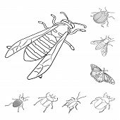 Vector Illustration Of Fauna And Entomology Icon. Collection Of Fauna And Animal Vector Icon For Sto poster