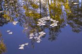 Blurred Reflection In The Water. Beautiful Autumn Landscape. Bright Colors Of Autumn.autumn Leaves R poster