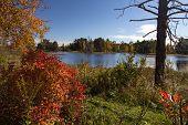 Seney National Wildlife Refuge. Wetlands And Autumn Foliage At The Seney National Wildlife Refuge In poster