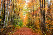 Scenic alley in rural Vermont during autumn time poster