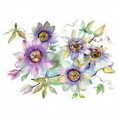Passiflora Bouquet Floral Botanical Flowers. Watercolor Background Set. Isolated Bouquets Illustrati poster