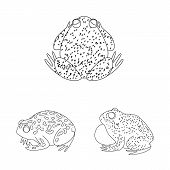 Isolated Object Of Amphibian And Animal Sign. Set Of Amphibian And Nature Stock Vector Illustration. poster