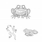 Vector Design Of Amphibian And Animal Sign. Collection Of Amphibian And Nature Stock Vector Illustra poster