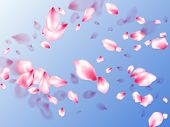 Spring Tree Flowers Parts, Airy Flying Petals On Blue Sky Background. Asian Poster Background. Reali poster